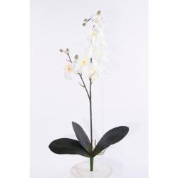 Phalaenopsis blanc sans pot L 70 cm