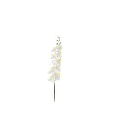 Phalaenopsis crème 94 cm