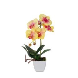 Phalaenopsis jaune dans le pot 30 cm