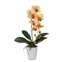 Phalaenopsis jaune dans le pot 60 cm