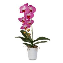 Phalaenopsis lila dans le pot 60 cm