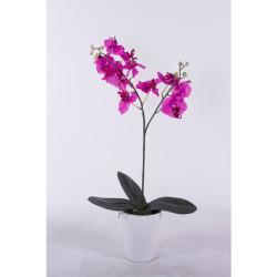 Phalaenopsis lila dans le pot d'argile 70 cm