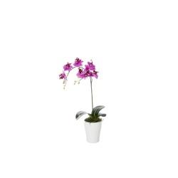 Phalaenopsis lila dans le pot en céram 50 cm