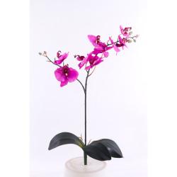 Phalaenopsis lila sans pot H 70 cm