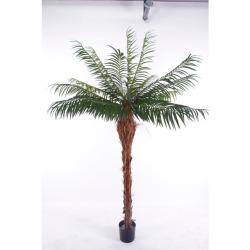 Phoenix tronc H 210 cm