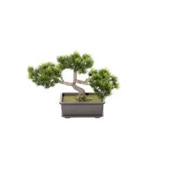 Pinus Bonsai 28 x 10 x 20 cm