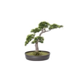 Pinus Bonsai 48 x 17 x 40 cm