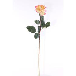 Rosa Caroline 65 cm
