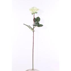 Rosa Caroline blanc 65 cm