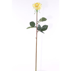 Rosa Caroline jaune 65 cm