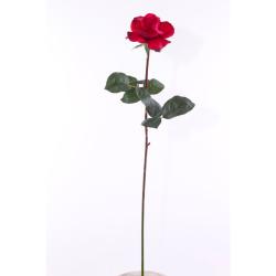 Rosa Caroline rouge 65 cm