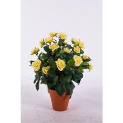 Rosa Mini jaune dans un pot d'argile 35 cm