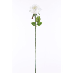 Rosa blanche 65 cm