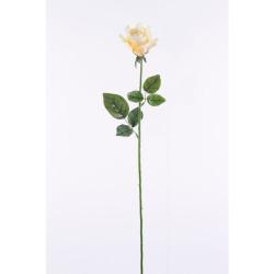 Rosa vanille 65 cm