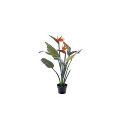 Strelitzia 97 cm