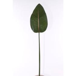 Strelitzia feuille 80 cm