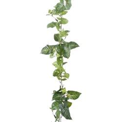 Syngonium Guirlande vert 180 cm