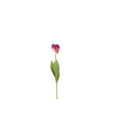 Tulipa pourpre 62 cm
