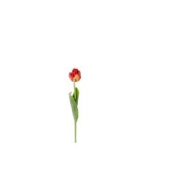 Tulipa rouge 62 cm