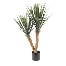 Yucca rostrata H 100 cm