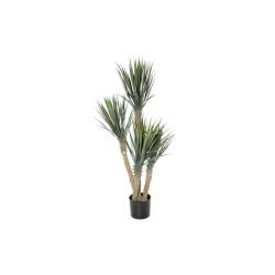 Yucca rostrata H 155 cm