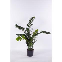 Zamioculcas zamiifolia H 95 cm
